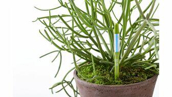 観葉植物の栽培が楽しくなる便利な水やりチェッカー
