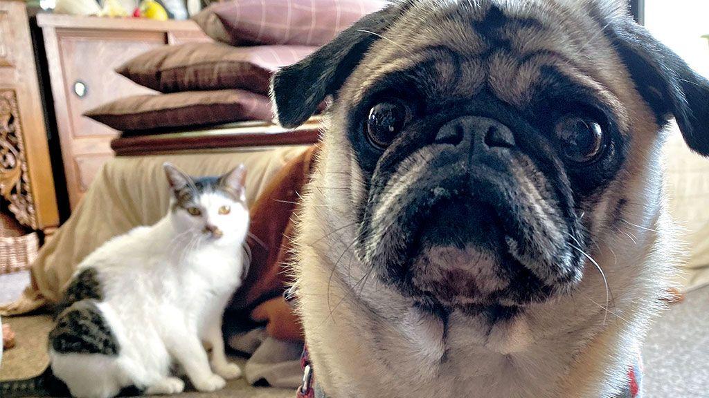 いつもびくびくしていた外猫を家の中へ。パグとの距離感は〈フォトエッセイ〉