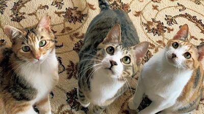 保護猫3兄弟が加入。ついに1ワン8ニャンの大家族に!〈お茶目っ子日記〉
