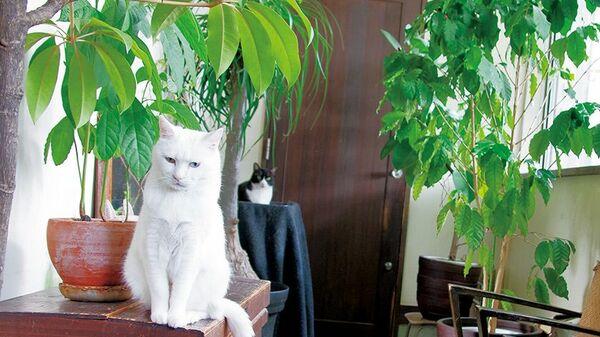 猫の手も借りたい! ジャングルイベント〈フォトエッセイ〉