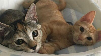 子宮頸がんと告知された私を奮い立たせた、保護猫との出会い〈ルポ・逆境から這い上がった私〉