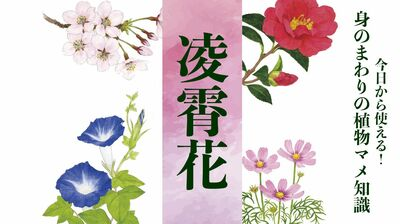 【凌霄花(ノウゼンカズラ)】狩野永徳の「花鳥図押絵貼屏風」にも登場する栄光の花〈身のまわりの植物マメ知識〉