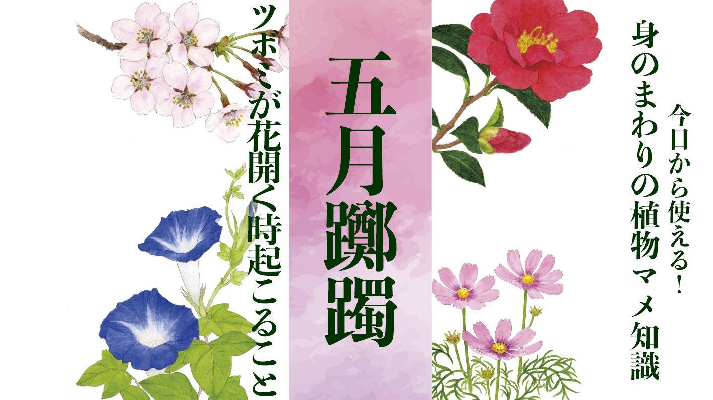 【五月躑躅】ツボミが花開く時起こること〈身のまわりの植物マメ知識〉