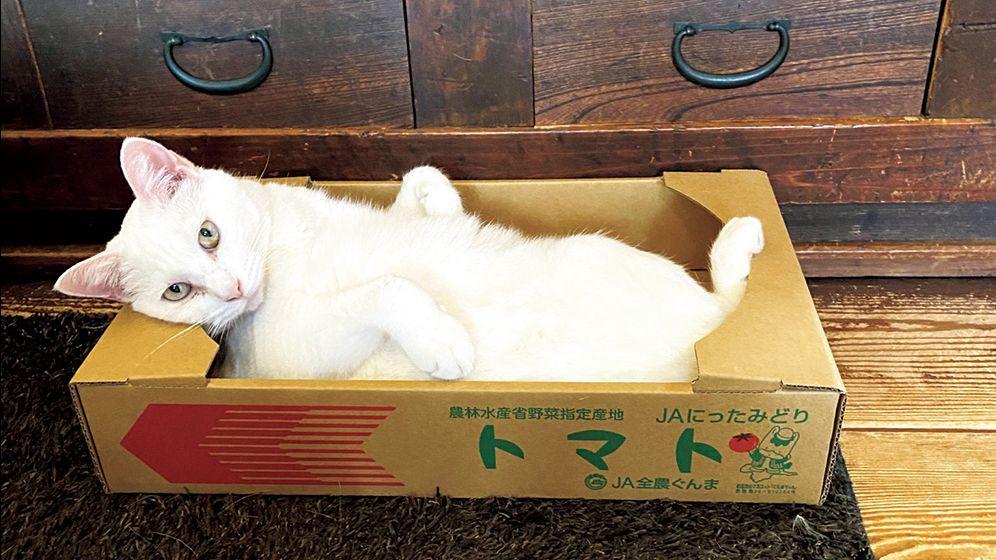 猫ホイホイか! 面白いほど箱に入るニャンコたち