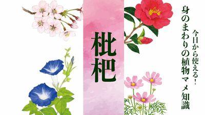 【枇杷(ビワ)】三大品種は茂木、田中、長崎早生。冬直前に咲き、初夏に実がなる〈身のまわりの植物マメ知識〉