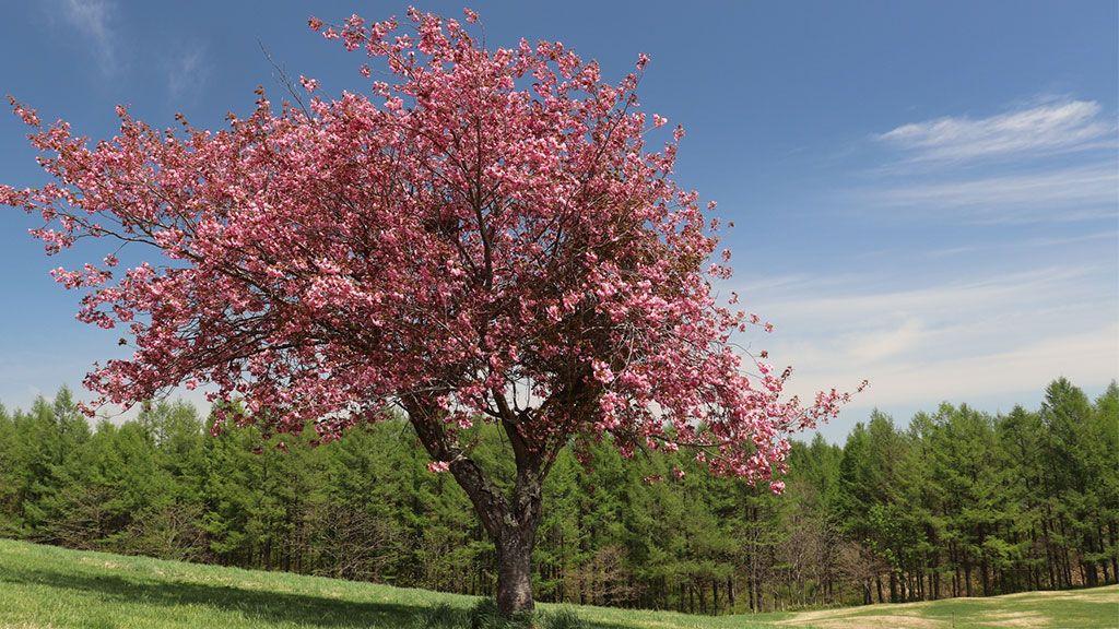 「死んだら、木の栄養になりたい」夫の一言から樹木葬を選んで【みんなのお墓事情・3】