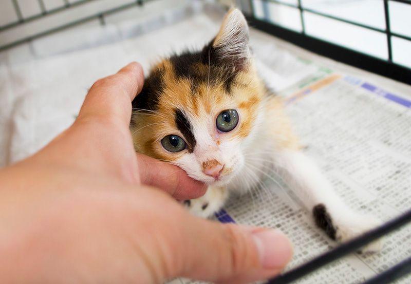 獣医師に聞く「ペットを飼うなら知っておきたい『いざという時』の心構え」【介護編】