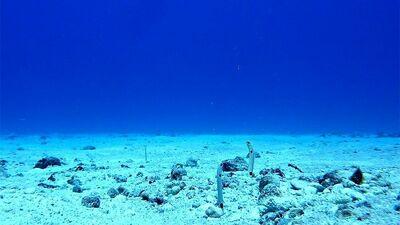 【底生生物の世界へようこそ】小さなアナジャコが海で担う絶大過ぎる役割とは